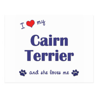 I Love My Cairn Terrier (Female Dog) Postcard