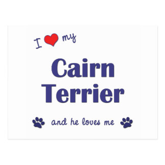 I Love My Cairn Terrier (Male Dog) Postcard