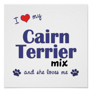 I Love My Cairn Terrier Mix (Female Dog) Poster