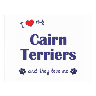 I Love My Cairn Terriers (Multiple Dogs) Postcard