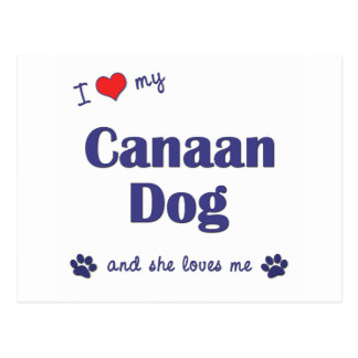 I Love My Canaan Dog (Female Dog) Postcards