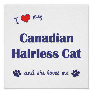 I Love My Canadian Hairless Cat (Female Cat) Poster
