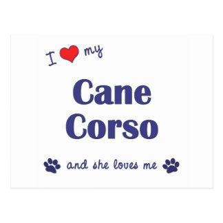 I Love My Cane Corso (Female Dog) Postcard