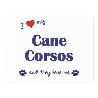 I Love My Cane Corsos (Multiple Dogs) Postcard