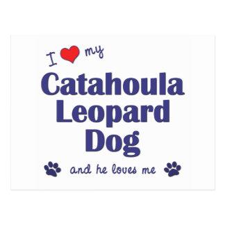 I Love My Catahoula Leopard Dog (Male Dog) Postcard