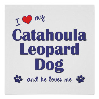 I Love My Catahoula Leopard Dog (Male Dog) Poster