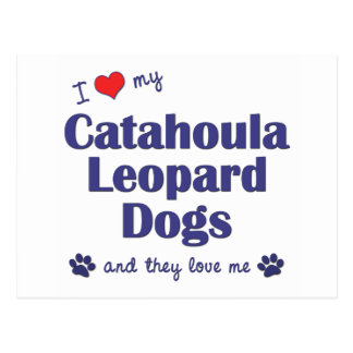 I Love My Catahoula Leopard Dogs (Multiple Dogs) Postcard