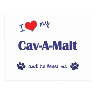 I Love My Cav-A-Malt Male Dog Postcard