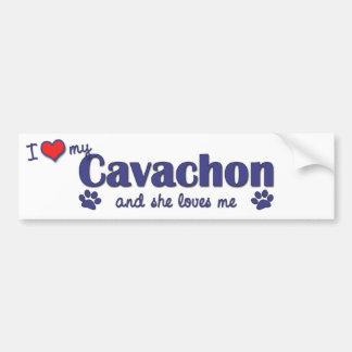 I Love My Cavachon (Female Dog) Bumper Sticker