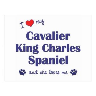 I Love My Cavalier King Charles (Female Dogs) Postcard