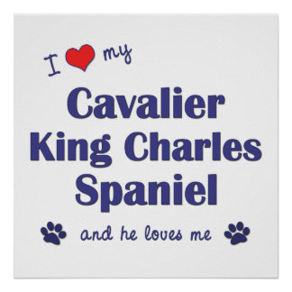 I Love My Cavalier King Charles Spaniel (Male Dog) Poster