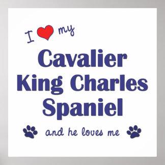 I Love My Cavalier King Charles Spaniel (Male Dog) Poster