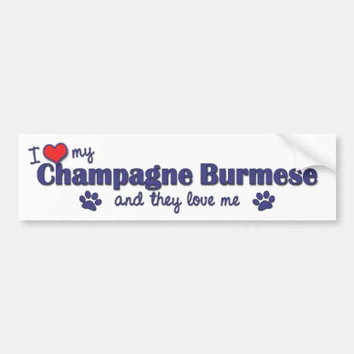I Love My Champagne Burmese (Multiple Cats) Bumper Sticker