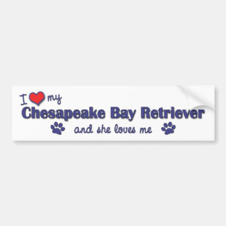 I Love My Chesapeake Bay Retriever (Female Dog) Bumper Stickers