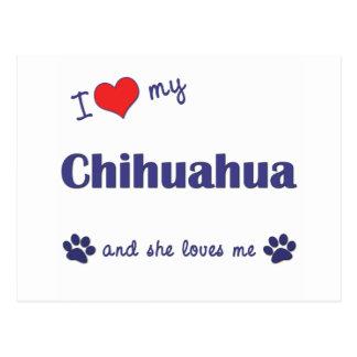I Love My Chihuahua (Female Dog) Postcard