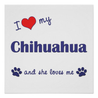 I Love My Chihuahua (Female Dog) Poster
