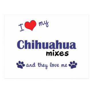 I Love My Chihuahua Mixes (Multiple Dogs) Postcard