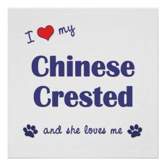 I Love My Chinese Crested (Female Dog) Poster