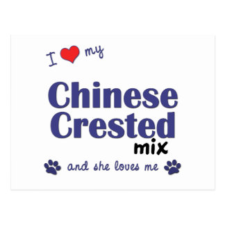 I Love My Chinese Crested Mix (Female Dog) Postcard