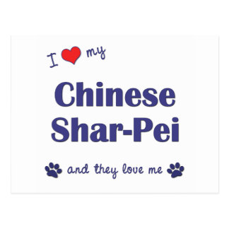 I Love My Chinese Shar-Pei (Multiple Dogs) Postcard