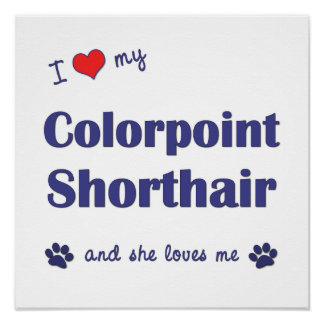 I Love My Colorpoint Shorthair (Female Cat) Poster