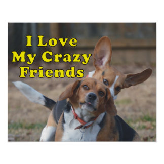 I Love My Crazy Friends Beagle Dog Poster