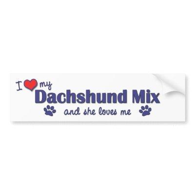 Whippet Dachshund Mix