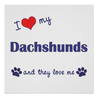 I Love My Dachshunds (Multiple Dogs) Poster