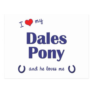 I Love My Dales Pony (Male Pony) Post Cards