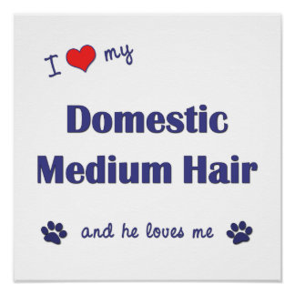 I Love My Domestic Medium Hair (Male Cat) Posters