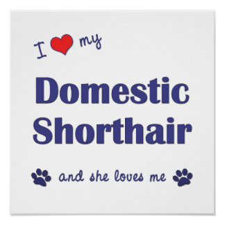 I Love My Domestic Shorthair (Female Cat) Poster