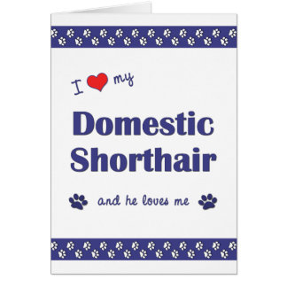 I Love My Domestic Shorthair (Male Cat) Greeting Card