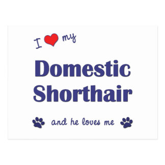 I Love My Domestic Shorthair (Male Cat) Postcard