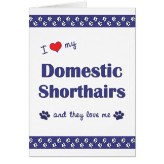 I Love My Domestic Shorthairs (Multiple Cats) Greeting Card