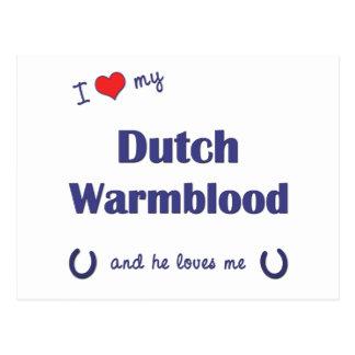 I Love My Dutch Warmblood (Male Horse) Postcard