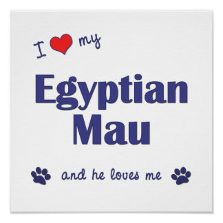 I Love My Egyptian Mau (Male Cat) Posters