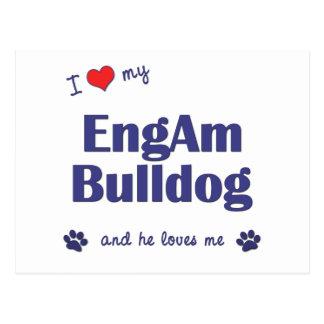 I Love My EngAm Bulldog (Male Dog) Postcard
