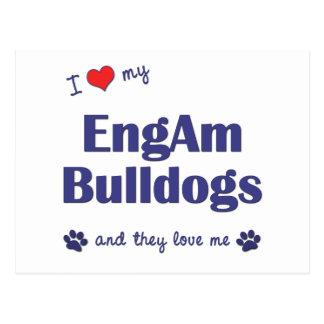I Love My EngAm Bulldogs (Multiple Dogs) Postcard
