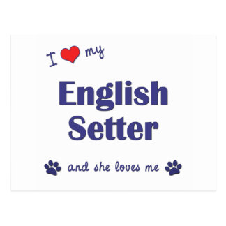 I Love My English Setter (Female Dog) Postcard