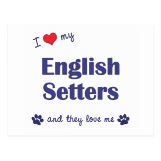 I Love My English Setters (Multiple Dogs) Postcard