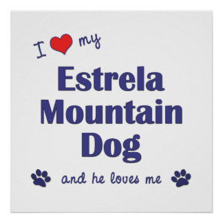 I Love My Estrela Mountain Dog (Male Dog) Posters