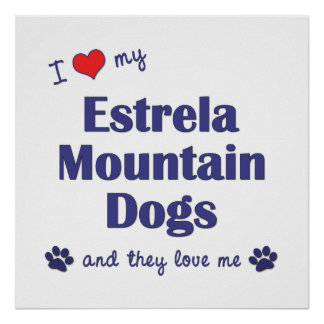 I Love My Estrela Mountain Dogs (Multiple Dogs) Posters