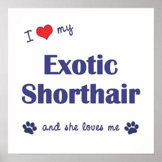 I Love My Exotic Shorthair (Female Cat) Print