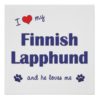 I Love My Finnish Lapphund Male Dog Posters