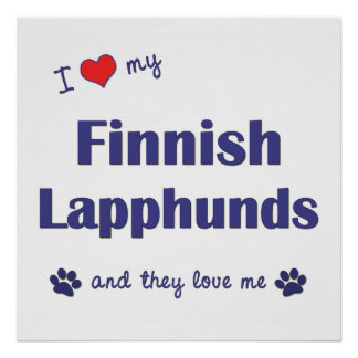 I Love My Finnish Lapphunds Multiple Dogs Poster