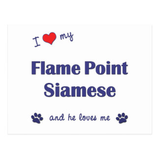 I Love My Flame Point Siamese (Male Cat) Postcard