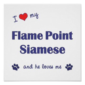 I Love My Flame Point Siamese (Male Cat) Posters