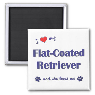 I Love My Flat-Coated Retriever (Female Dog) 2 Inch Square Magnet