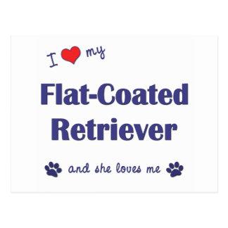I Love My Flat-Coated Retriever (Female Dog) Postcard