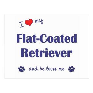 I Love My Flat-Coated Retriever (Male Dog) Postcard